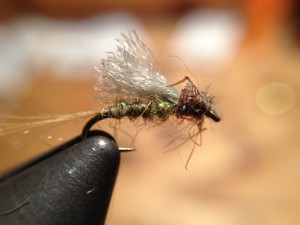 Shillinglaw Emerger