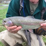 Sunday Rainbow Trout